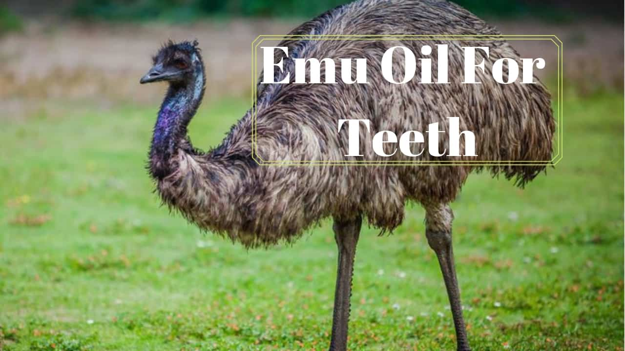 Emu Oil For Teeth